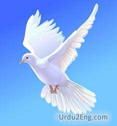 dove Urdu Meaning