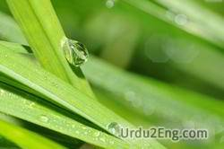droplet Urdu Meaning