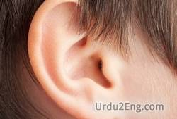 ear Urdu Meaning