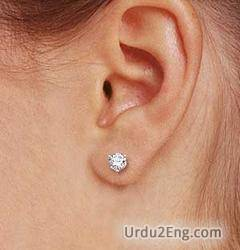 earlobe Urdu Meaning
