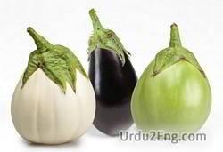 eggplant Urdu Meaning