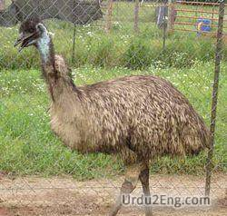emu Urdu Meaning