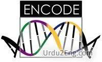 encode Urdu Meaning