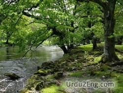environment Urdu Meaning