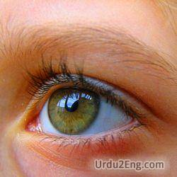 eye Urdu Meaning