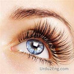 eyelash Urdu Meaning
