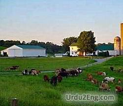 farm Urdu Meaning