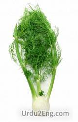 fennel Urdu Meaning