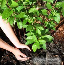 fertilize Urdu Meaning