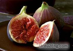 fig Urdu Meaning