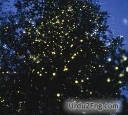 firefly Urdu Meaning