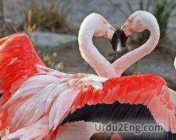 flamingo Urdu Meaning