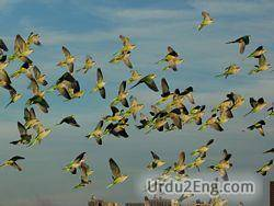 flock Urdu Meaning