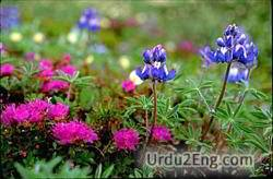 flora Urdu Meaning