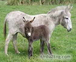 foal Urdu Meaning