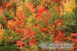 foliage Urdu Meaning