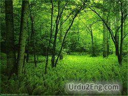 forest Urdu Meaning