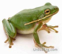 frog Urdu Meaning