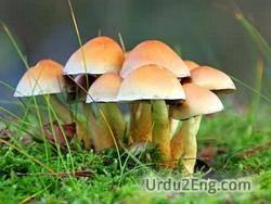 fungi Urdu Meaning