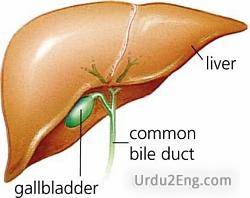 gallbladder Urdu Meaning