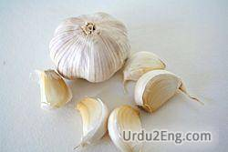 garlic Urdu Meaning
