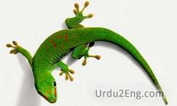 gecko Urdu Meaning