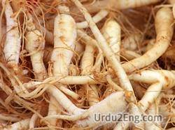 ginseng Urdu Meaning