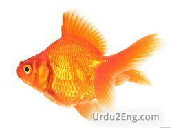 goldfish Urdu Meaning