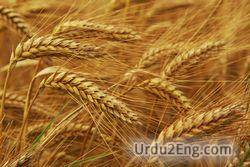 grain Urdu Meaning