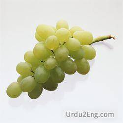 grape Urdu Meaning