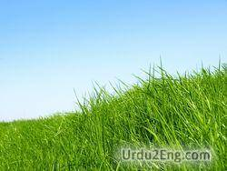 grass Urdu Meaning