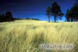 grassland Urdu Meaning