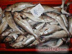 haddock Urdu Meaning