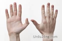 hand Urdu Meaning