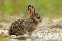 hare Urdu Meaning