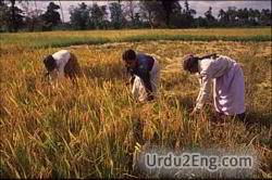 harvest Urdu Meaning