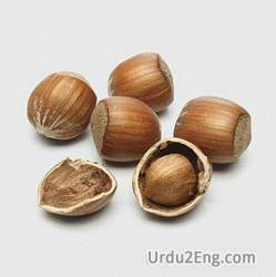 hazelnut Urdu Meaning