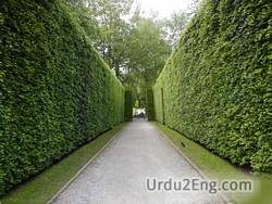hedge Urdu Meaning