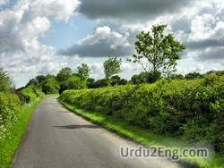 hedgerow Urdu Meaning