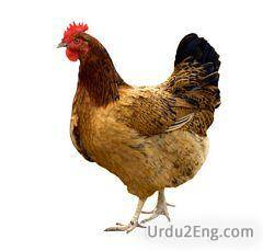 hen Urdu Meaning