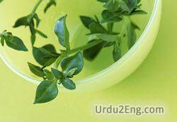 herb Urdu Meaning