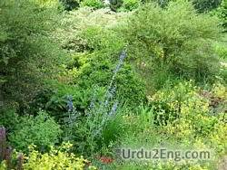 herbaceous Urdu Meaning
