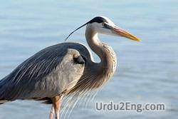 heron Urdu Meaning