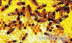 honeybee Urdu Meaning