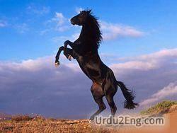 horse Urdu Meaning