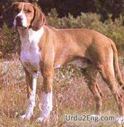 hound Urdu Meaning