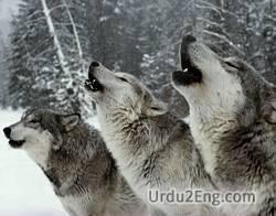 howl Urdu Meaning
