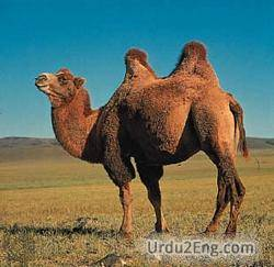 hump Urdu Meaning
