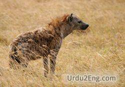 hyena Urdu Meaning