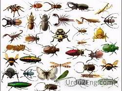insect Urdu Meaning